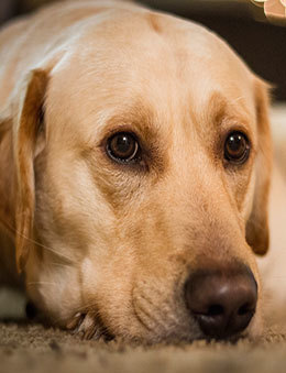 Pets can be a factor when showing your home